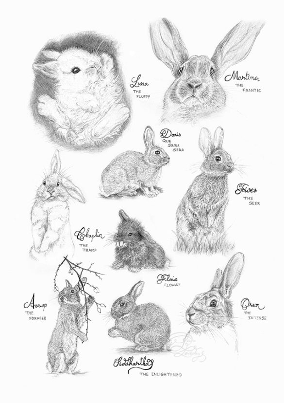 bunnies rabbits sketches laura loveday